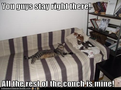 You guys stay right there!  All the rest of the couch is mine!
