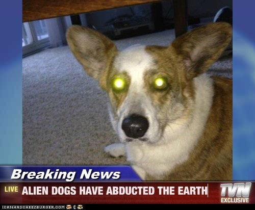 Breaking News - ALIEN DOGS HAVE ABDUCTED THE EARTH
