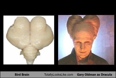 Bird Brain Totally Looks Like Gary Oldman as Dracula
