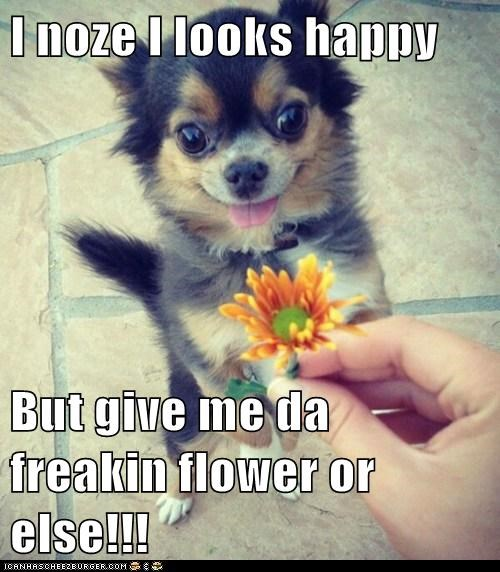 I noze I looks happy   But give me da freakin flower or else!!!