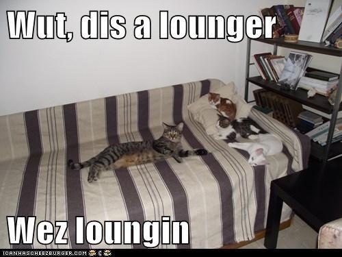 Wut, dis a lounger  Wez loungin