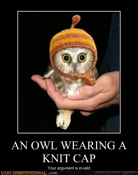AN OWL WEARING A KNIT CAP