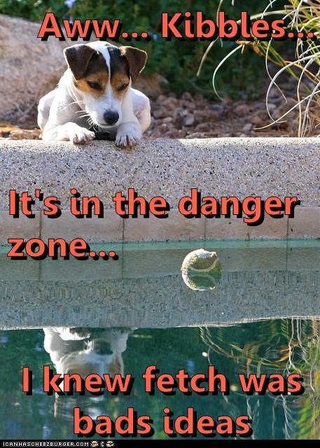 Aww... Kibbles... It's in the danger zone... I knew fetch was bads ideas