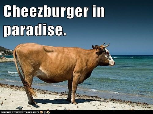 Cheezburger in paradise.