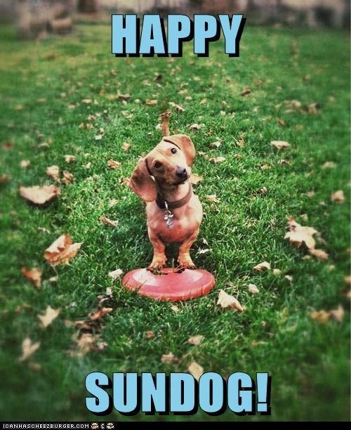 frisbee,grass,happy sundog,leaves,Sundog
