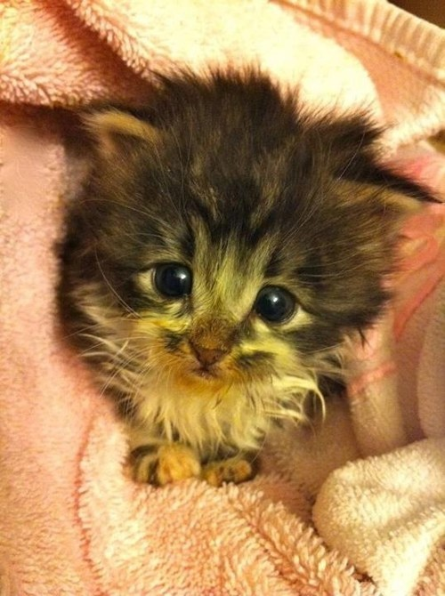 Cyoot Kitteh of teh Day: I'll Grow Into This Head, Right?  Right?!?!