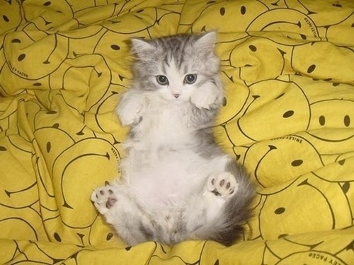 Cats,cyoot kitteh of teh day,kitten,sheets,smiles,smiley faces,tummies