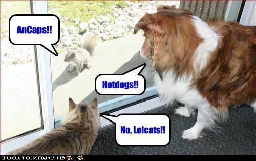 cat,dogs,cheezburger sites,debate,squirrel,fighting