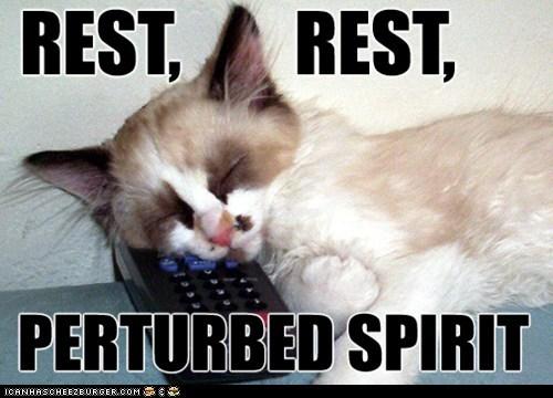 captions,Cats,clicker,remote,remote control,rest,Spirit,TV