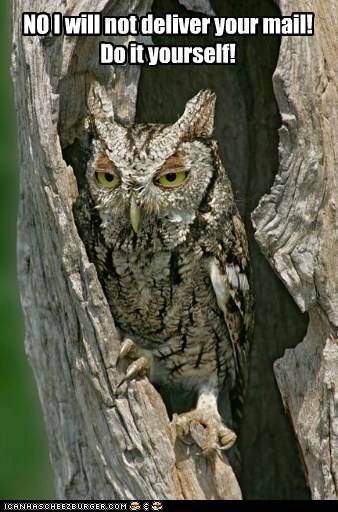 Owl,deliver,mail,do it yourself,no,Hogwarts,angry,tired