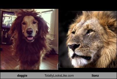doggie Totally Looks Like lionz