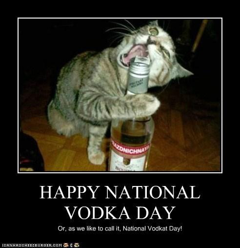 alcohol,booze,captions,Cats,drinking,holidays,national vodka day,vodka
