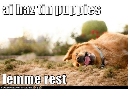 ai haz tin puppies  lemme rest
