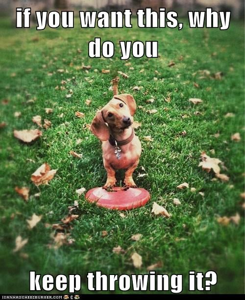 dogs,dachshund,grass,why-did-you-do-that,frisbee