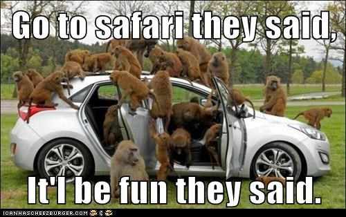 Go to safari they said,  It'l be fun they said.