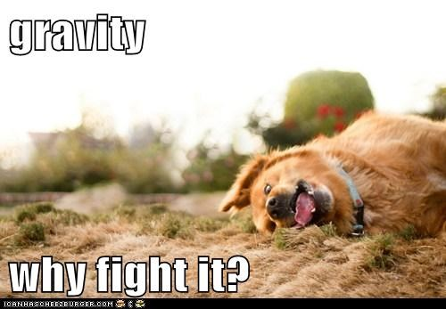 dogs,dont-fight-it-bro,give up,Gravity,what breed,derp
