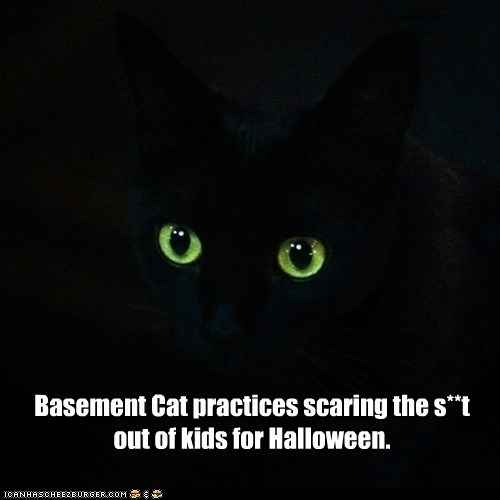 Basement Cat practices scaring the s**t out of kids for Halloween.
