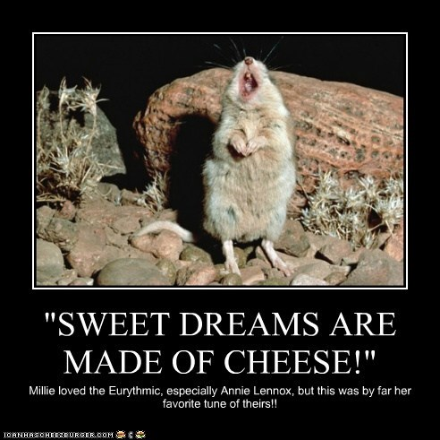 """SWEET DREAMS ARE MADE OF CHEESE!"""