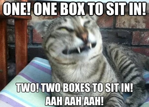 The Count,Sesame Street,counting,boxes,cardboard boxes,vampires,laughing,Cats,captions,strong-a-href-http-chzb-gr-JtV1ma-target-_blank-I-can-has-MOAR-funny-LOLcats-a-strong,I-can-has-MOAR-funny-LOLcats