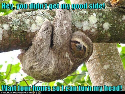 wait,turn,good side,slow,photographer,sloth