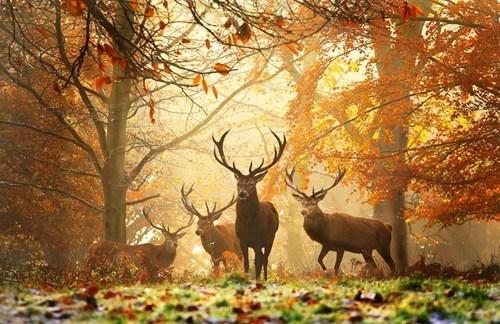 fall,deer,nature,season,leaves,best of week,Hall of Fame,categoryimage