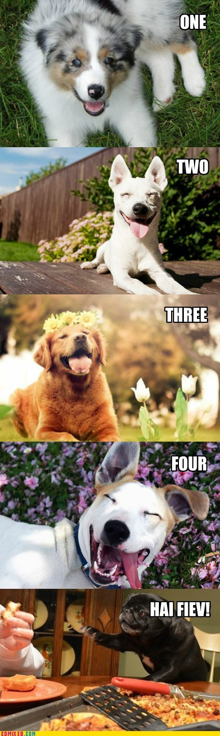 The Five Levels of Dog Happy