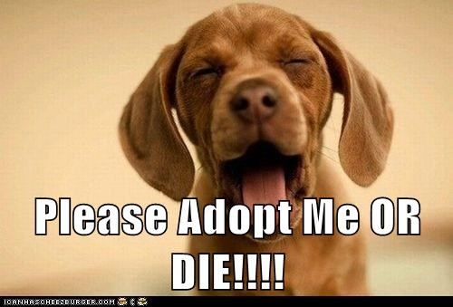 Please Adopt Me OR DIE!!!!