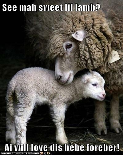 See mah sweet lil lamb?  Ai will love dis bebe foreber!