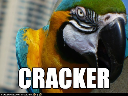 Polly DEMANDS a Cracker
