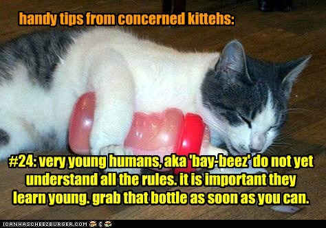 handy tips from concerned kittehs