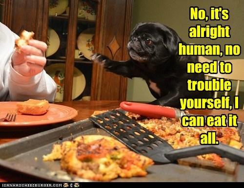 dogs,pug,pizza,all mine,food