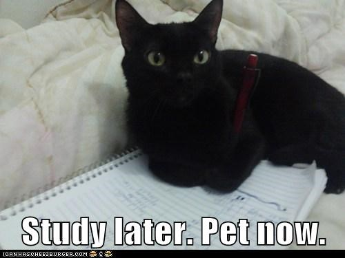 Study later. Pet now.