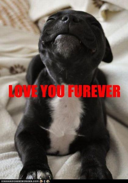 LOVE YOU FUREVER