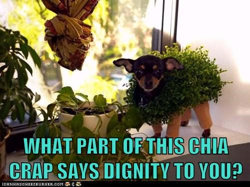 WHAT PART OF THIS CHIA CRAP SAYS DIGNITY TO YOU?