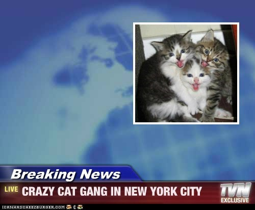 Breaking News - CRAZY CAT GANG IN NEW YORK CITY