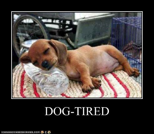 DOG-TIRED