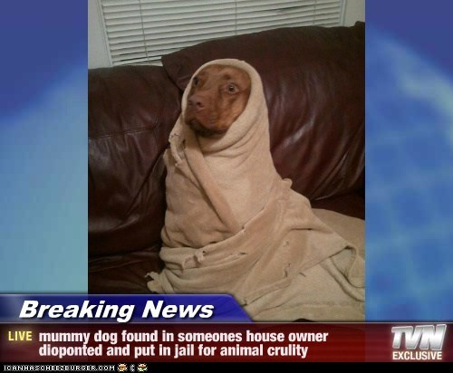 Breaking News - mummy dog found in someones house owner dioponted and put in jail for animal crulity