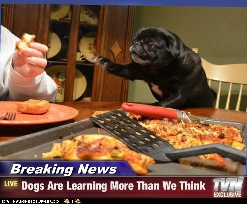 Breaking News - Dogs Are Learning More Than We Think