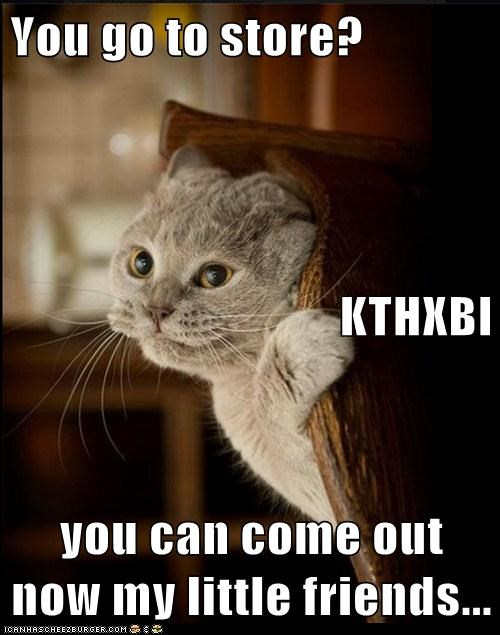 You go to store? KTHXBI you can come out now my little friends...
