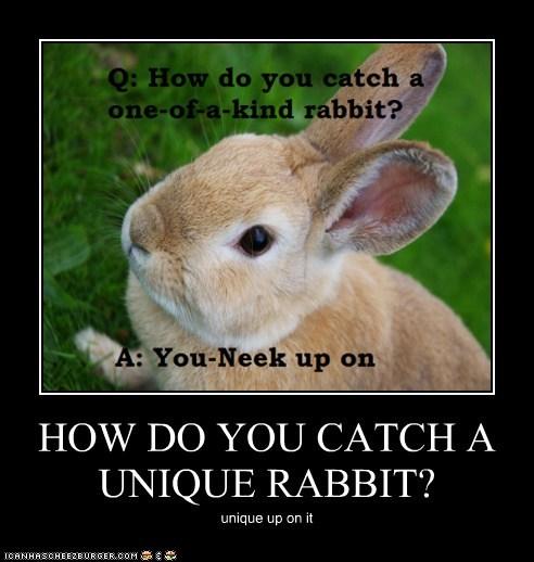HOW DO YOU CATCH A UNIQUE RABBIT?