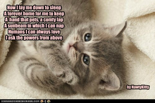 A kitty prayer