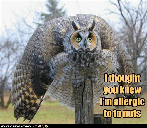 puffed up,feathers,Owl,nuts,allergy,reaction