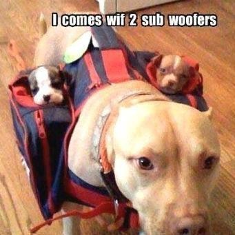 dogs,subwoofers