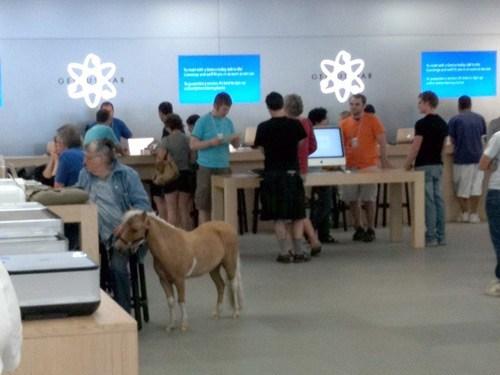 Miniature Horse,mini horse,pygmy horse,horse,apple store,apple,iphone 5,ios 6