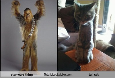 star wars thing Totally Looks Like tall cat