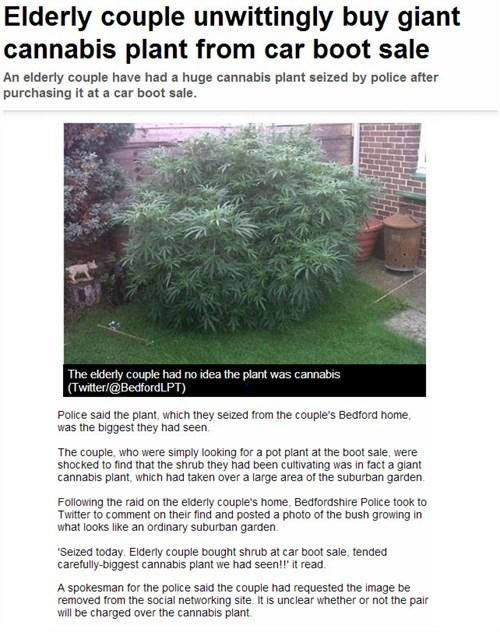 plant,marijuana,drugs,news