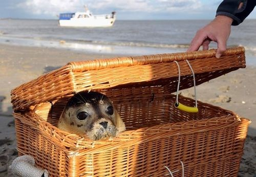 Seal in a Basket