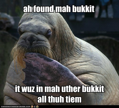 found,bukkit,all the time,walrus,lost,lolrus