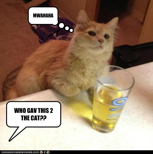 WHO GAV THIS 2 THE CAT??