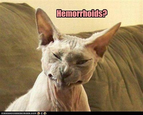 hemorroid,pain,discomfort,health,gross,butt,Cats,captions
